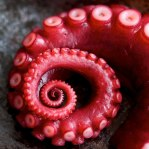 Incredible-Fractals-in-nature-12