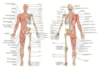 anatomy-