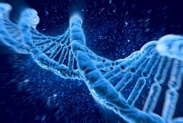 DNA molecules human