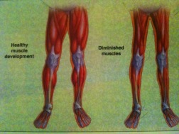 strong_weak-legs1